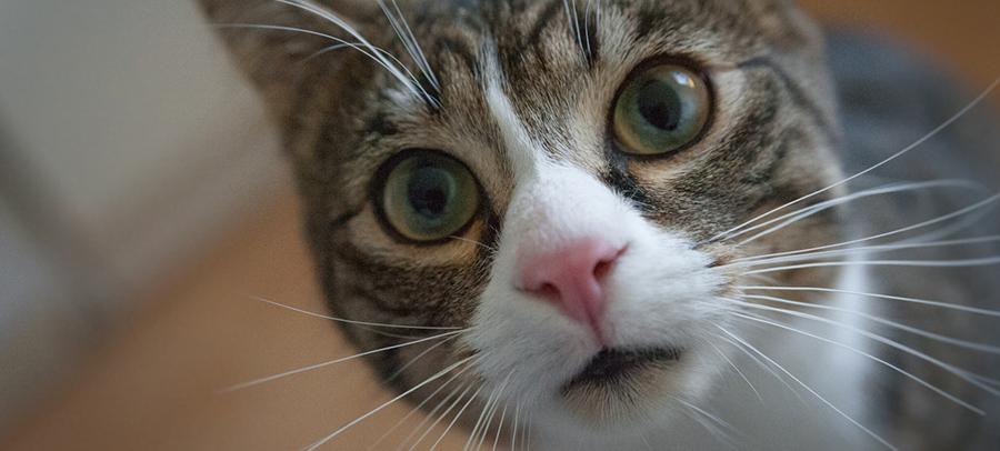 La curiosidad no mató al gato, lo hizo más feliz